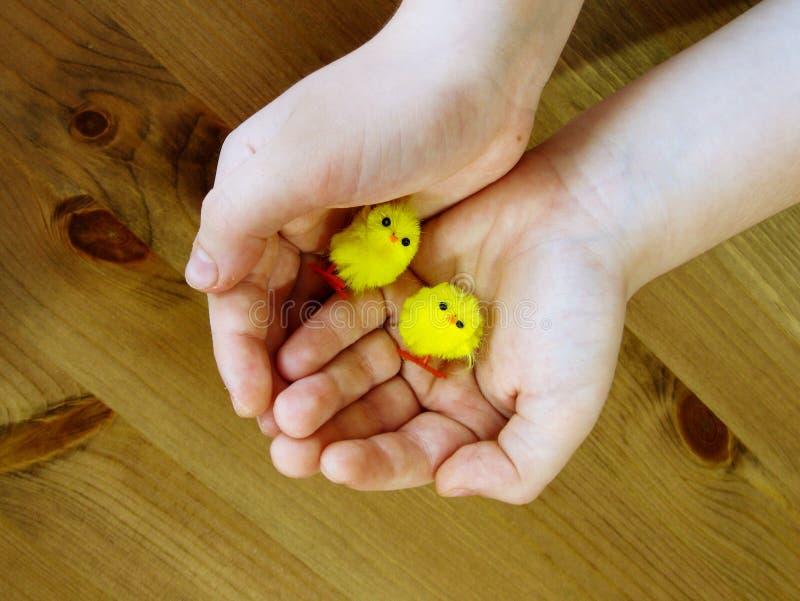 Руки детей держат 2 небольших цыплят игрушки стоковые фотографии rf