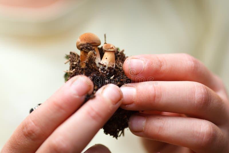 Руки детей держа малые грибы стоковое изображение