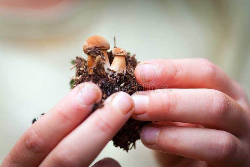 Руки детей держа малые грибы стоковое фото