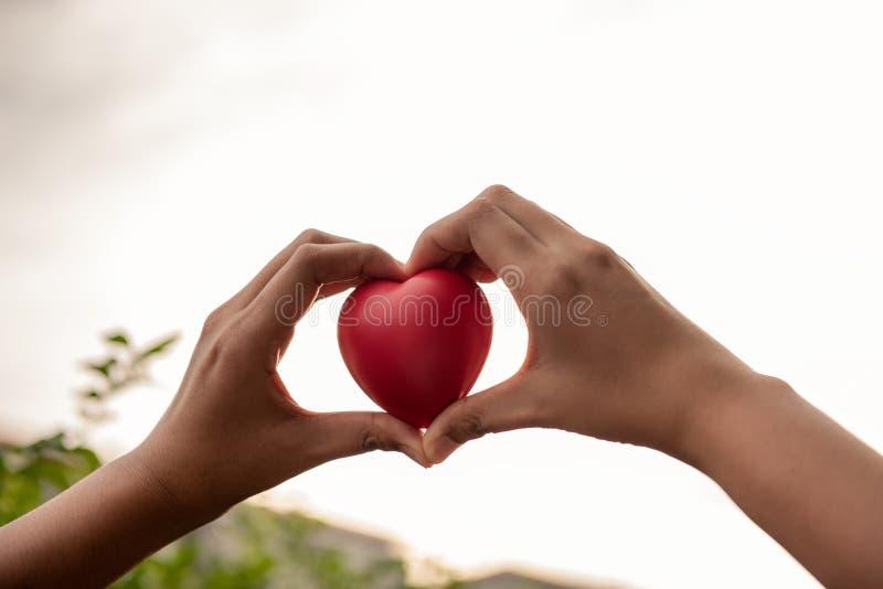 Руки женщины держат красное сердце к давать кто-то стоковые изображения rf