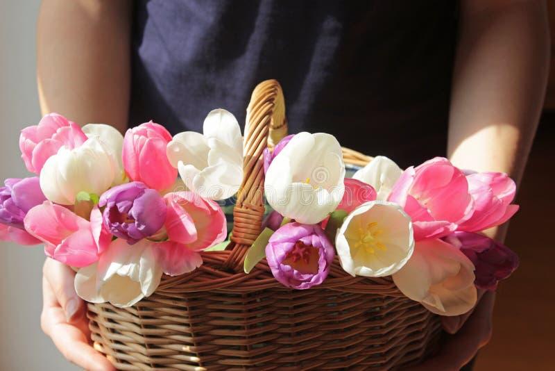 Руки женщины держа плетеную корзину с тюльпанами стоковые фотографии rf