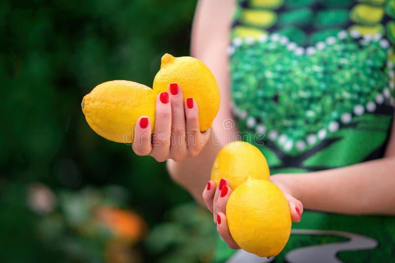 Руки женщины держа 4 свежих ярких лимона Пальцы с красным маникюром, зеленым платьем и деревом лимона в предпосылке r стоковая фотография