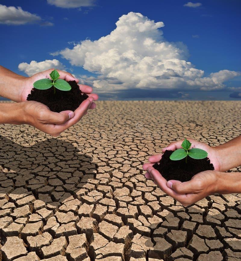 Руки засаживая вал Завершите почву в землю, но droug стоковое фото