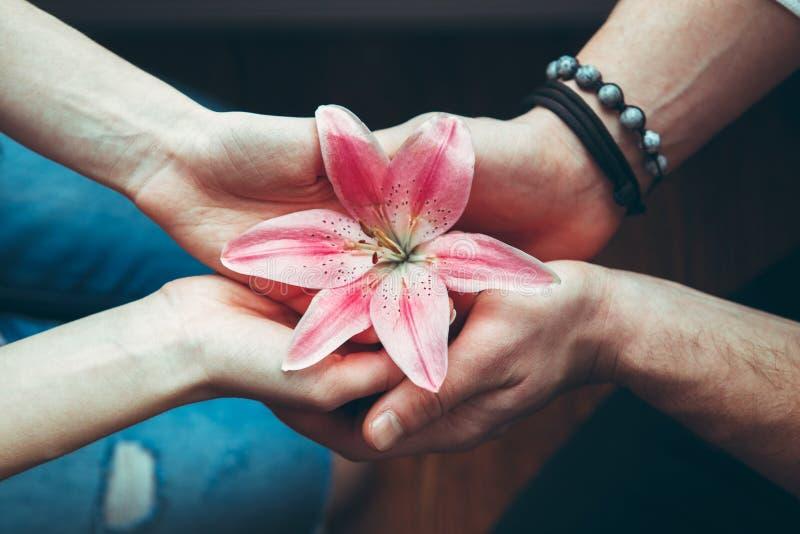 Руки крупного плана человека и женщины держа розовую красную лилию цветка совместно, взгляд от верхней части выше стоковые изображения rf