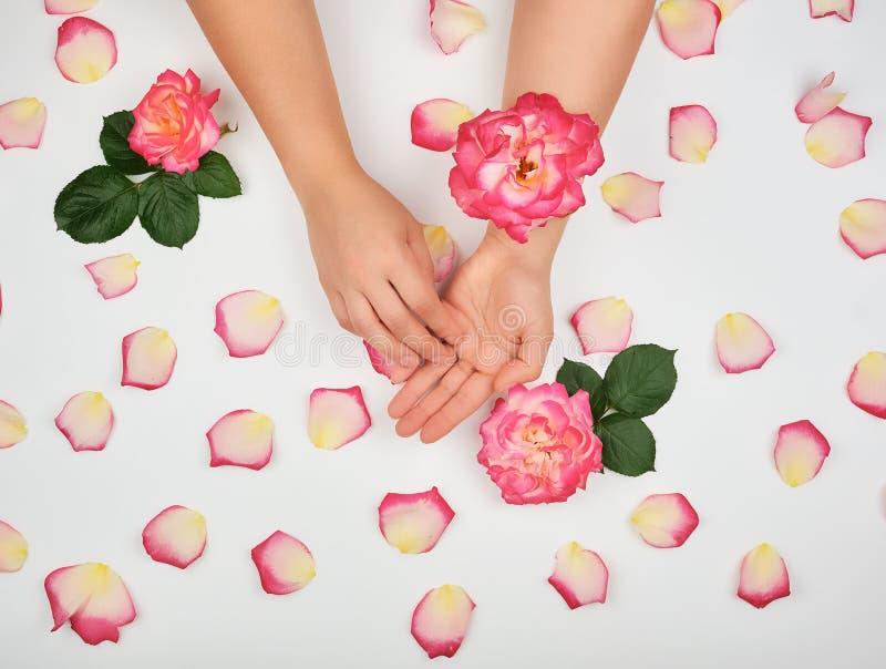 2 руки маленькой девочки с ровной кожей и розовыми лепестками розы стоковая фотография rf