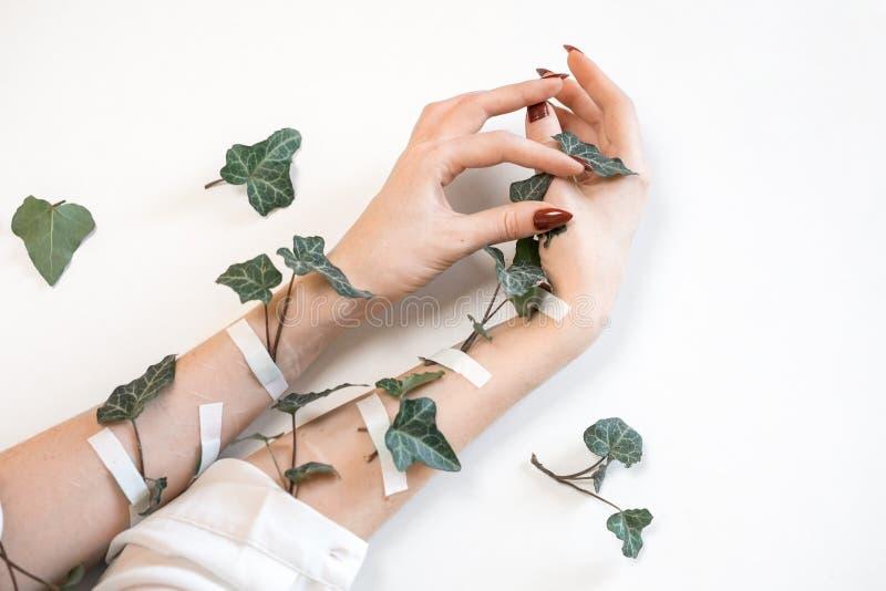 Руки модных красивых женщин на белой предпосылке и зеленых листьях, заботе кожи руки стоковое фото rf