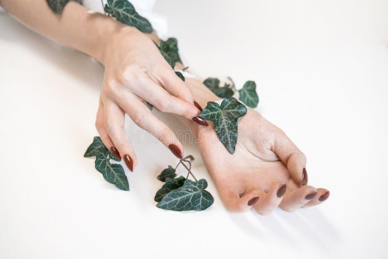 Руки модных красивых женщин на белой предпосылке и зеленых листьях, заботе кожи руки стоковые фотографии rf