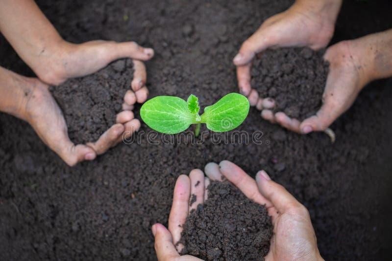 Руки молодых людей засаживая саженцы на почве r стоковое фото