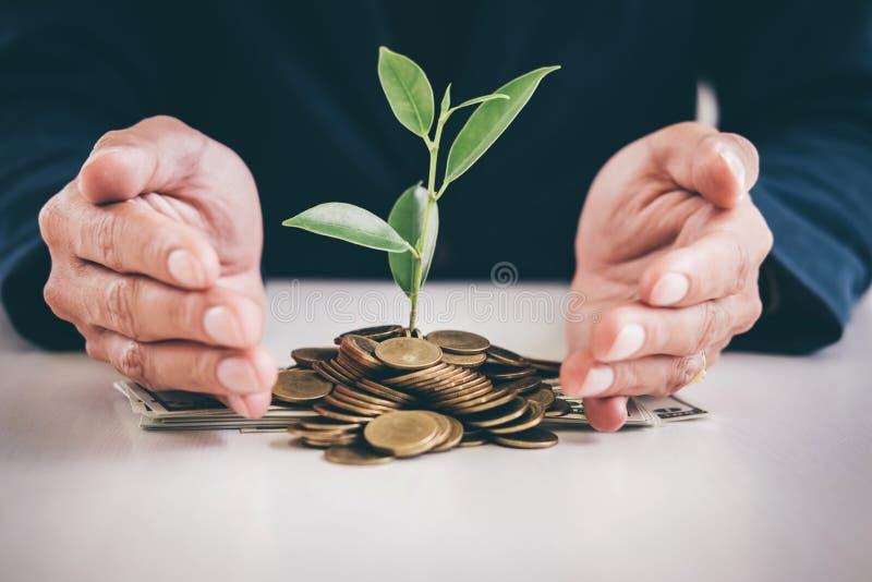 Руки предохранения от бизнесмена засаживают расти пускать ростии от gol стоковая фотография rf