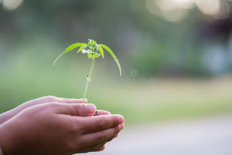 Руки ребенка держа и заботя молодое зеленое растение, руку защищают саженцы которые растущие, засаживая дерево, уменьшают глобаль стоковое изображение
