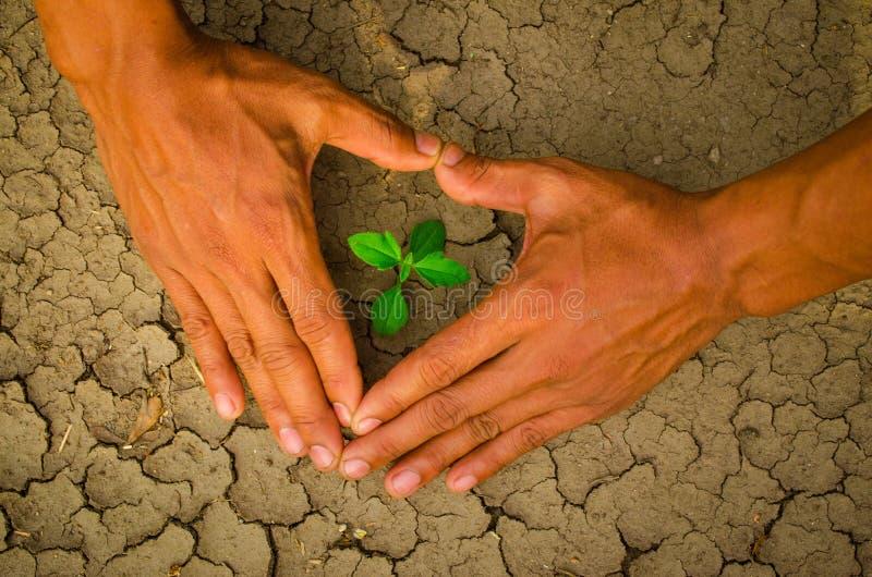 Руки формируя сердце формируют вокруг дерева растя на треснутой земле стоковые фото