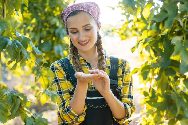 Руки umbels хмеля удерживания женщины фермера для испытывать стоковое изображение