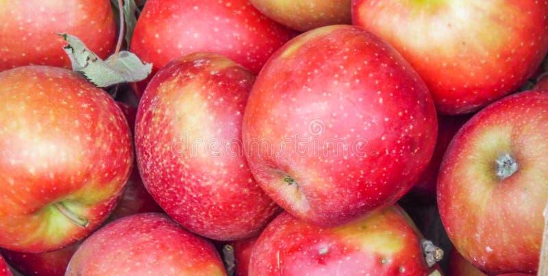 Румынские био яблоки jonathan стоковые фото