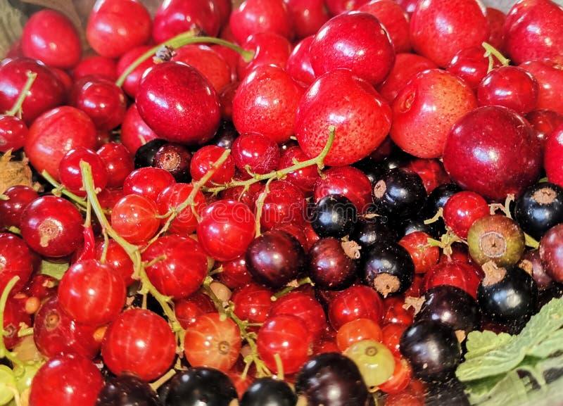 Румяна плодов стоковые фотографии rf