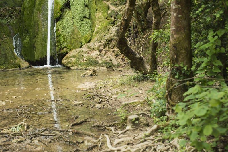Русло реки Sandy окруженное зелеными деревьями стоковые фотографии rf