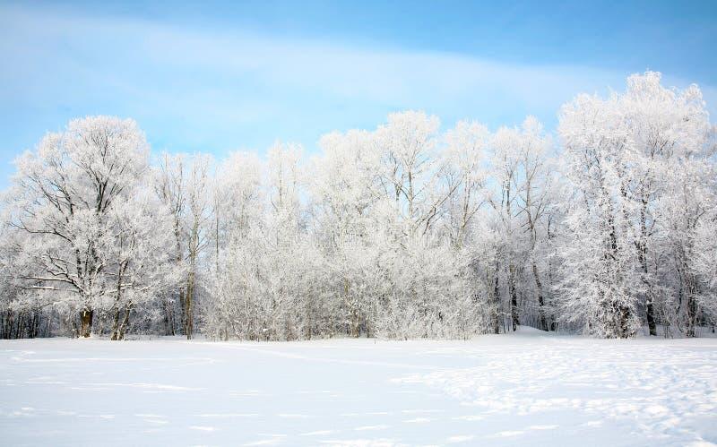 Русская зима в январь стоковые фото