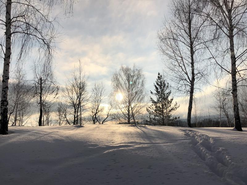 Русская пуща зимы стоковое фото
