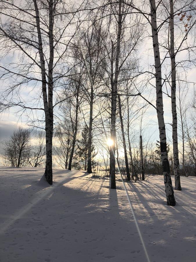 Русская пуща зимы стоковые фото