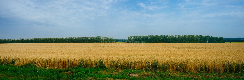 Русская родина - русская сельская местность 9 стоковая фотография