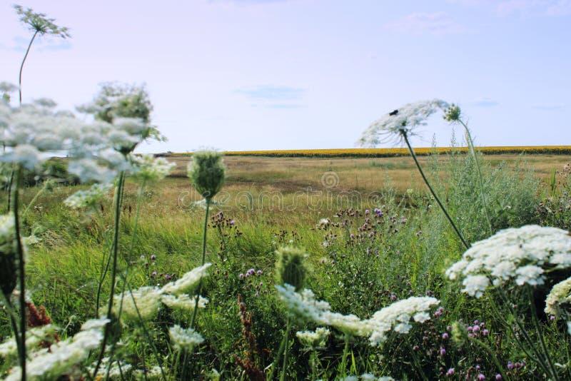 Русское поле лета стоковая фотография rf