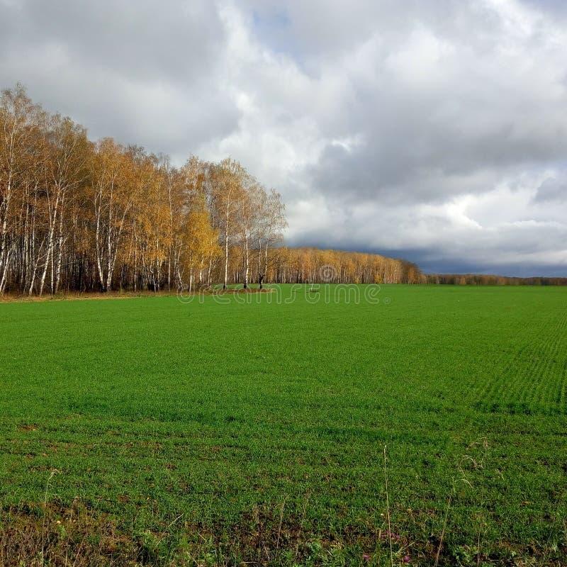 Русское поле стоковое изображение
