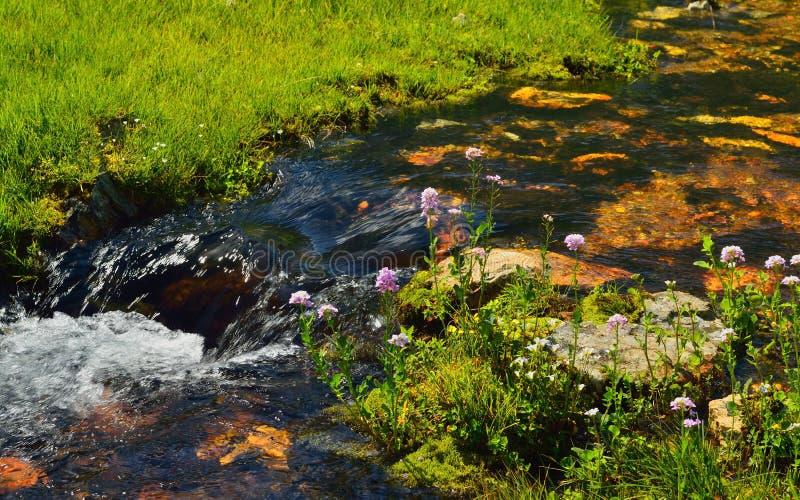 Ручеек в горах стоковое фото rf