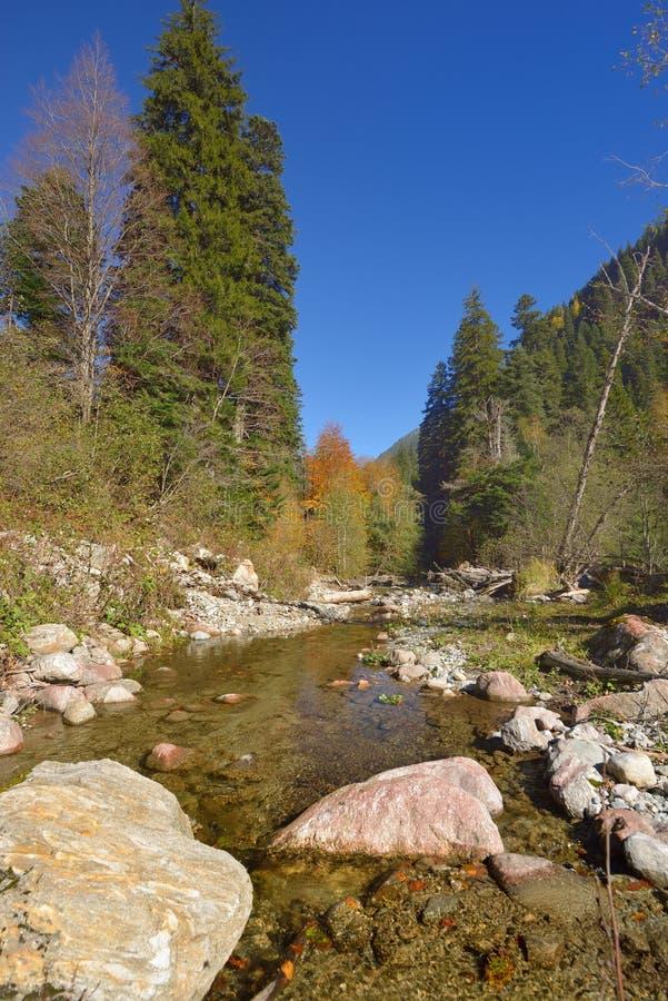 Ручеек в горах стоковое фото