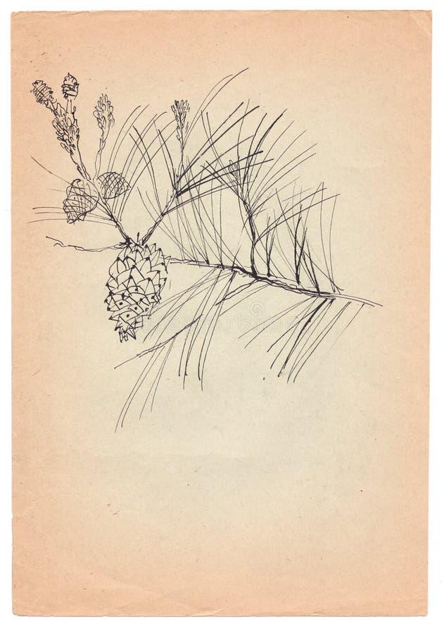ручка Ель-конуса нарисованная на старой бумаге иллюстрация вектора