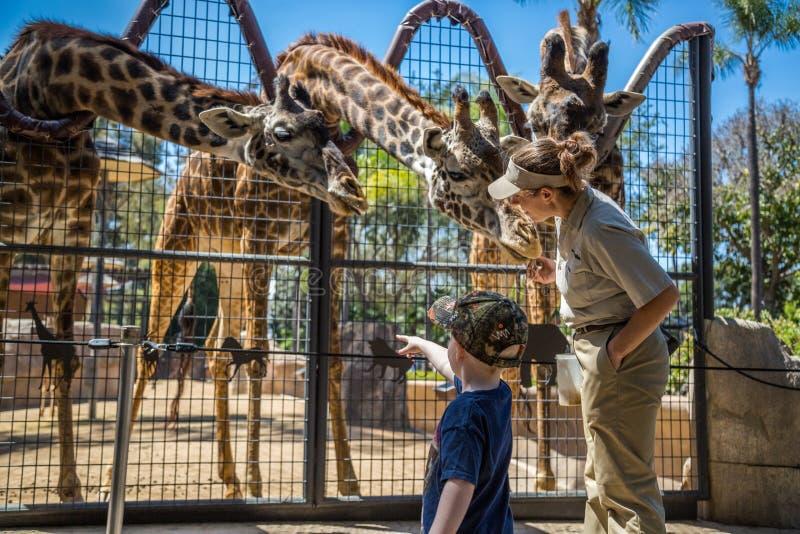 Ручка жирафа стоковые фотографии rf