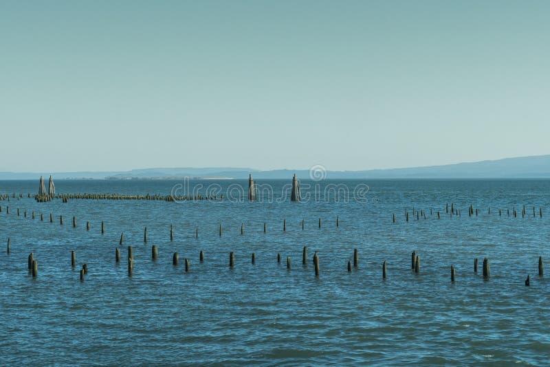 Ручки вставляя из brackish воды болота около Astoria, Орегона, США стоковое изображение rf