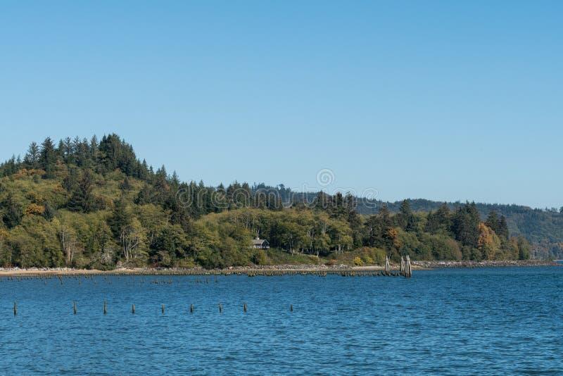 Ручки вставляя из brackish воды болота около Astoria, Орегона, США стоковое фото
