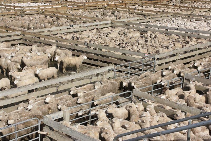 Download Ручки овец стоковое фото. изображение насчитывающей поголовье - 40588452