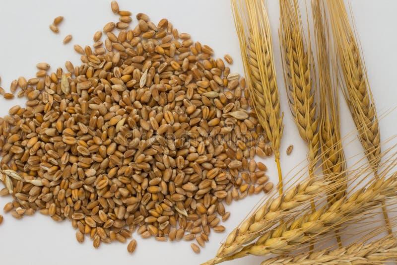Ручки пшеницы, ячменя и пшеницы на белой предпосылке Взгляд сверху стоковое изображение rf