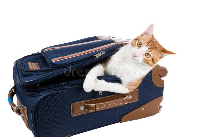 Ручной багаж: кот и чемодан стоковые фото