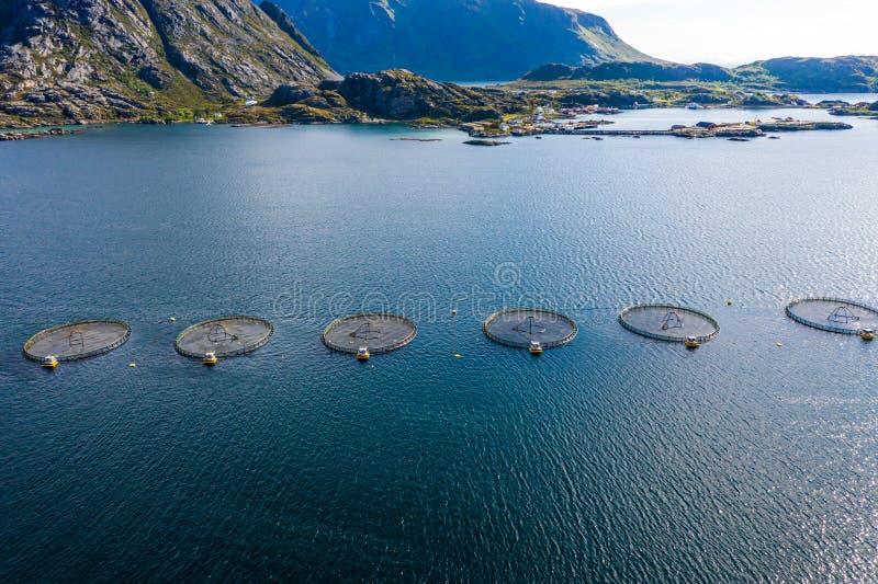 Рыбалка лососося в Норвегии стоковые изображения rf