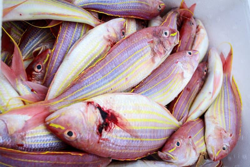 Фото рыбы вьетнама