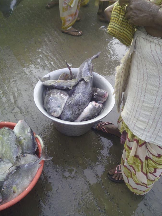 Рыба стоковое фото rf