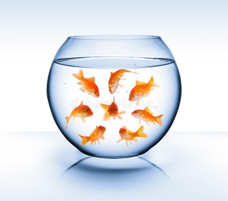 Рыбка - концепция, задирать и изоляция разнообразия стоковые фото