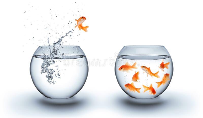 Рыбка скача из воды - объединяйтесь в команду концепция стоковая фотография