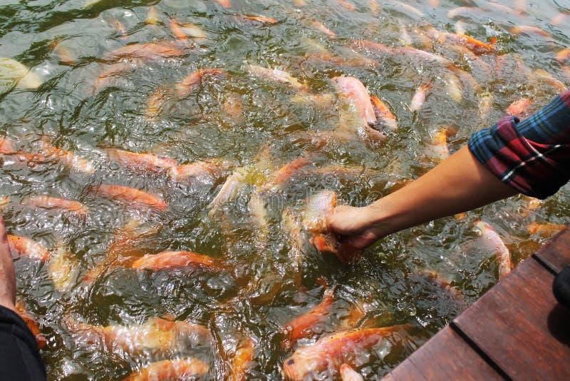 Рыбка стоковое изображение