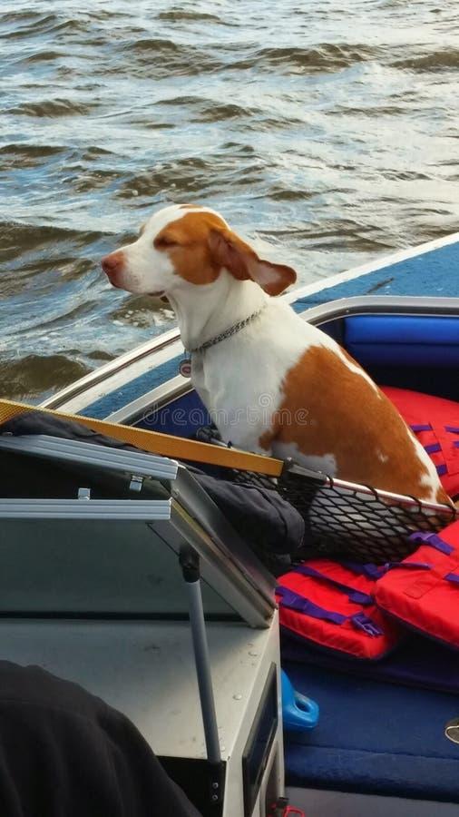 Рыбная ловля собаки стоковое изображение rf