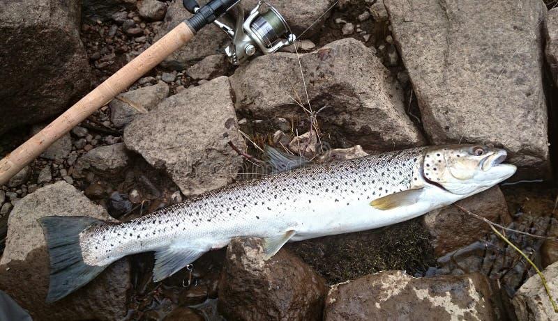 Рыбная ловля форели стоковое фото rf