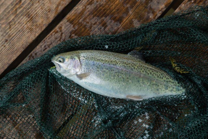 Рыбная ловля форели стоковая фотография
