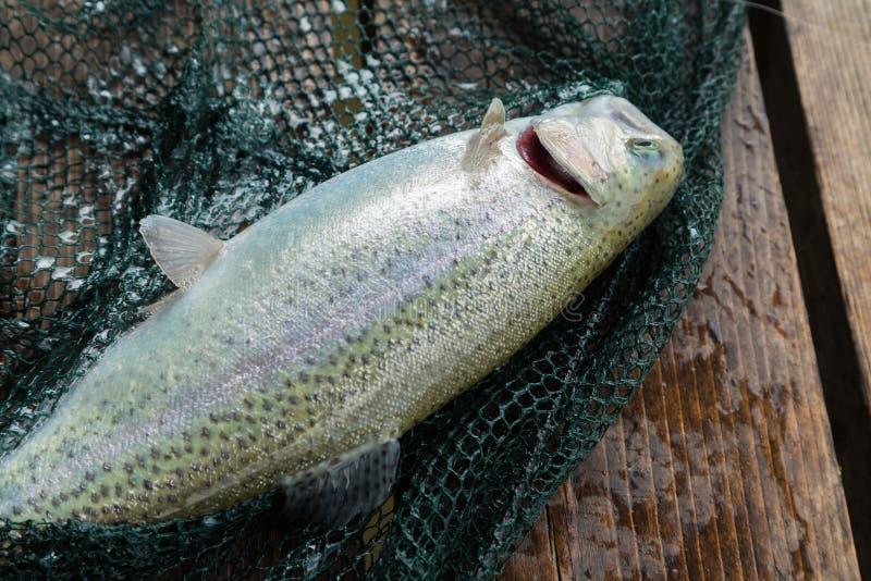 Рыбная ловля форели стоковые изображения rf