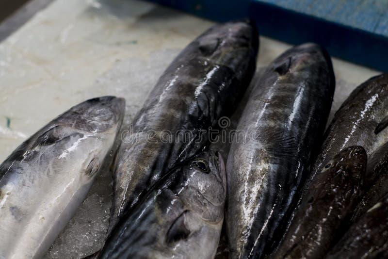 Рыбный базар головы скумбрии детали свежий стоковая фотография rf