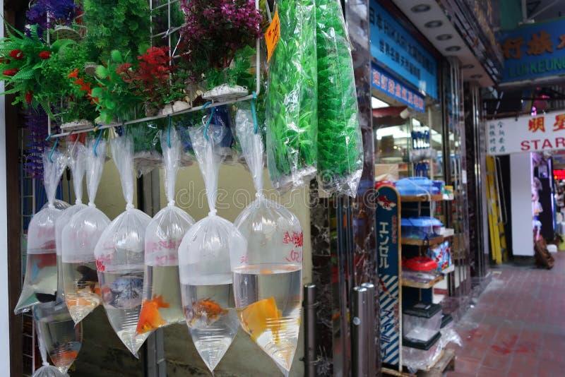 Рыбный базар золота Гонконга в улице Tung Choi стоковые фотографии rf