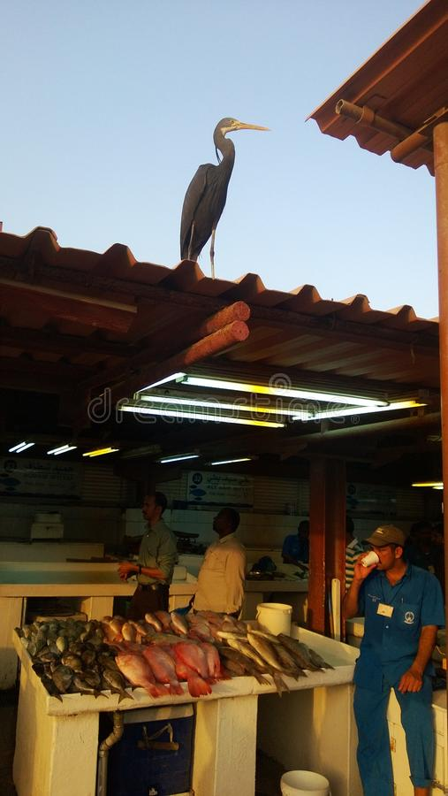 Рыбный базар стоковое изображение rf
