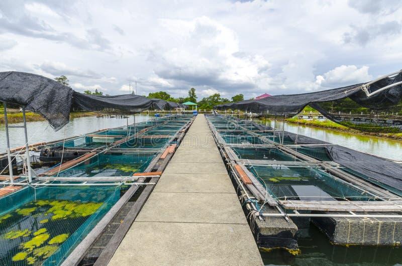 Рыбоводческое хозяйство в пруде. Таиланд стоковая фотография rf