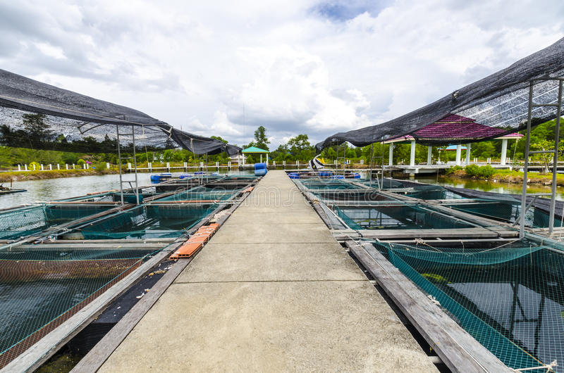 Рыбоводческое хозяйство в пруде. стоковые изображения