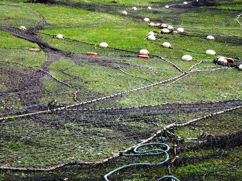 Рыболовная сеть положенная вне на лужайку стоковое изображение